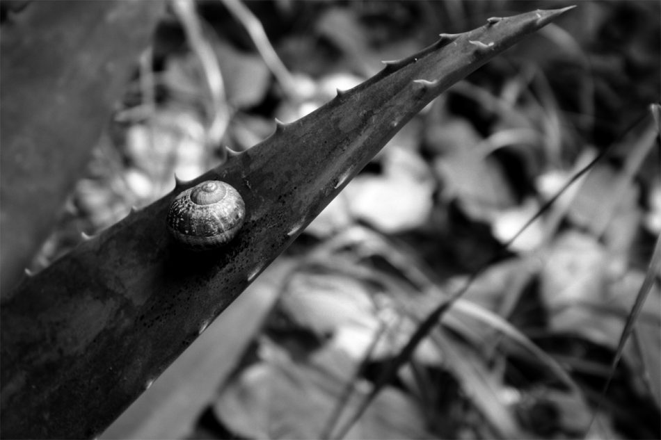 garden-snail-wicked-problems